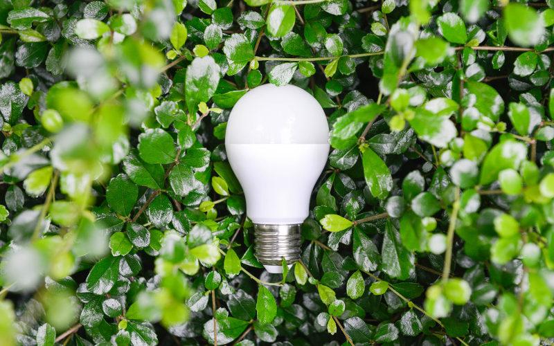 Ekologické podnikanie