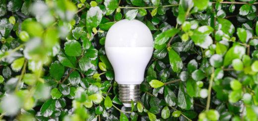 Zelený biznis
