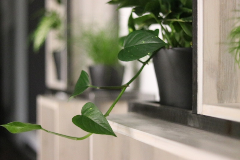 Rastlina na poličke